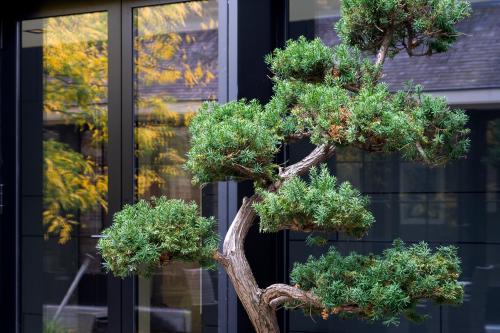 bonsai antwerpen bredeweg kantoor te huur
