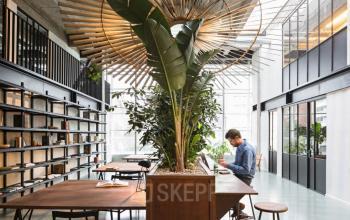 Arbeitsplatz in großem Raum mit tollem Ambiente und Bepflanzung